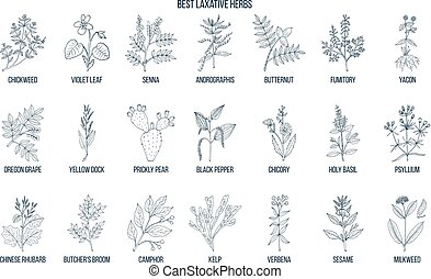 Best laxative herbs - Herbs and spices that fight against...