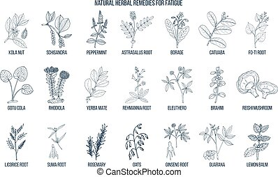 Best medicinal herbs for fatigue