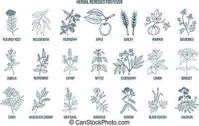Best medicinal herbs for fever. Hand drawn vector set of...