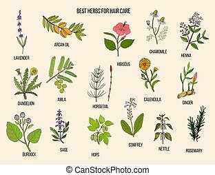 Best medicinal herbs for hair care