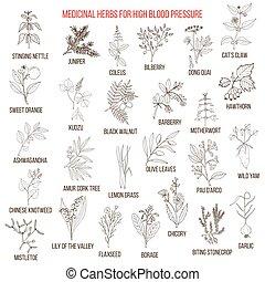 Best medicinal herbs for high blood pressure.