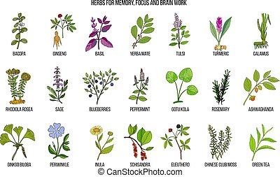Best medicinal herbs for memory, focus and brain work. Hand...