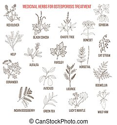 Best medicinal herbs for osteoporosis