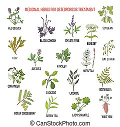 Best medicinal herbs for osteoporosis. Hand drawn set of...