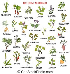 Best natural herbal aphrodisiacs. Hand drawn vector set of...