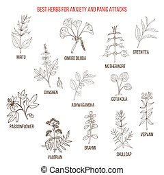Best natural herbs for anxiety and panic attacks