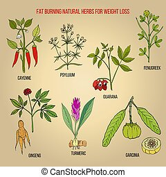 Best natural herbs for fat burning and fast weight loss....