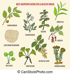 Best nootropic medicinal herbs for a healthy brain. Hand...