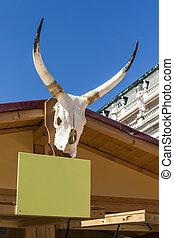 bestiame, cranio, corna