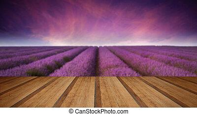 betäuben, blaßlila feld, landschaftsbild, sommer, sonnenuntergang, mit, hölzern, plan