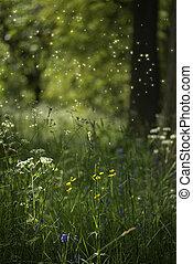 betäuben, fantasie, stil, landschaftsbild, bild, von, fireflies, in, nacht zeit, wald, szene