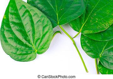 betel leaf is herbal
