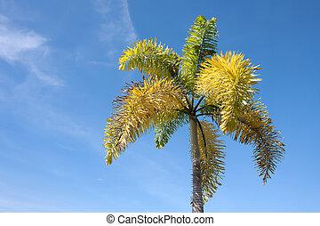 betel palm tree on blue sky