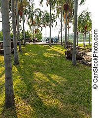 Betel palm. - Walk in the Betel palm park.