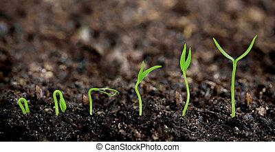 betriebe, pflanze, gartenerde, -, wachsen, fortschritt
