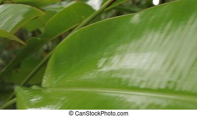 Betriebe, regnerisch, Jahreszeit, tropische, hell, grün, Regen, unter, wald