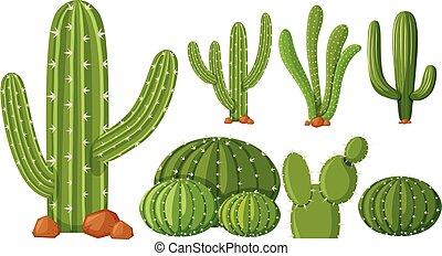 verschieden kaktus arten verschieden vektor kaktus clipart vektor suche illustration. Black Bedroom Furniture Sets. Home Design Ideas