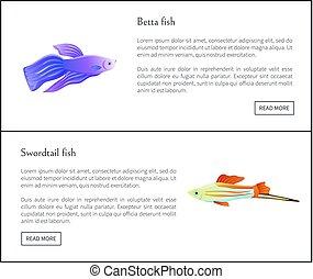 Betta and Swirdtail Fish Set Vector Illustration - Betta and...