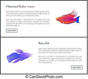 Betta Fish and Flasher Set Vector Illustration - Betta fish...