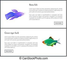 Betta Fish Green Tiger Barb Vector Illustration - Betta fish...