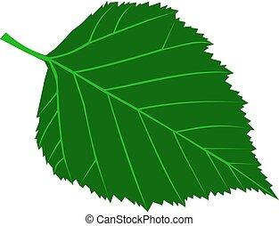 betula, verrucosa, birke