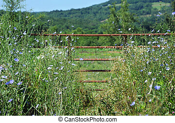 Between tall Grass - Path leads between tall wildflowers and...