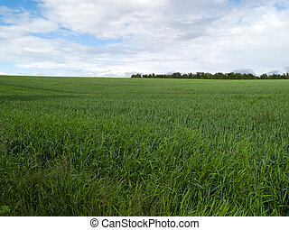 Beutiful green field background