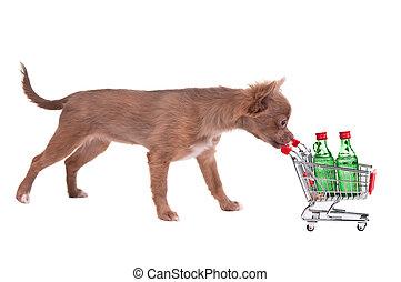 , bevásárlókocsi, rámenős, kutyus