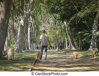 beverly heuvels, ca, usa, juni, 2015, mooi, boom lijnde, beverly, tuinen, park, is, een, populair, vlek, voor, achtervolg walkers, van, de, rijk, en, famous.