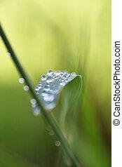 bewässern fallen, grünes blatt