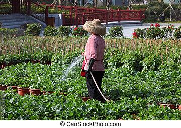 bewässernd pflanzen, in, kleingarten, porzellan