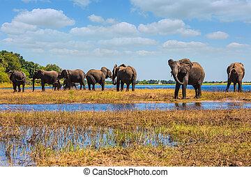 bewässerung, in, delta, okavango