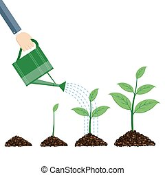 bewässerung, plants., buechse