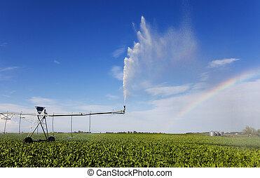 bewässerung, regenbogen