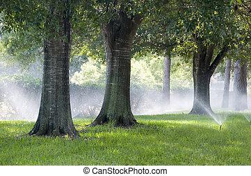 bewässerung, sparying, eiche, südlich, system, bäume, gras
