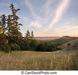 bewaldet, berge, sonnenuntergang, in, sommer
