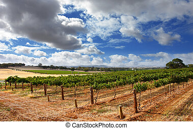 bewolkt, wijngaard