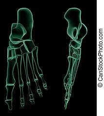bezahlen röntgenaufnahme, menschliche