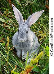 bezaubernd, kaninchen