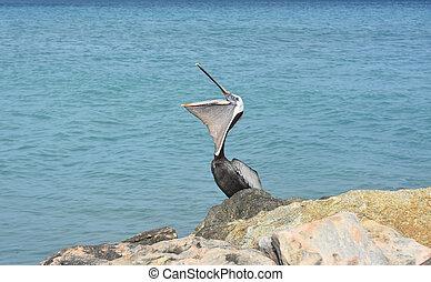 bezaubernd, pelikan, mit, ihr, schnabel, rgeöffnete, breit