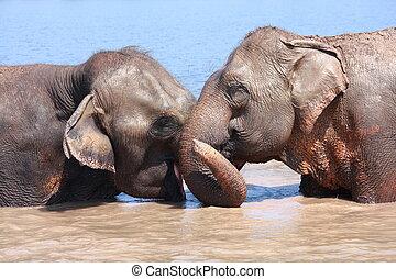 beziehung, elefant