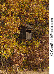 bezvadný, animální shánět, podzim, bojiště, bydliště, les, věž, pozorný