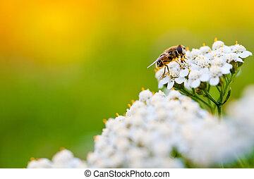 bi, på, a, blomma, in, fjäder, dag