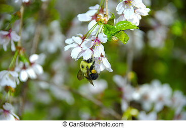bi, på, en, blomst