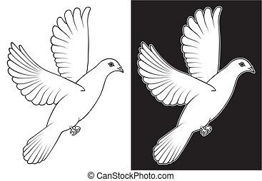 biała gołębica