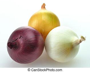 białe cebule, żółty, czerwony