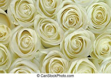 białe kwiecie