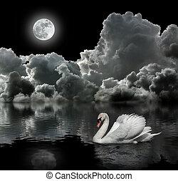 biały łabędź, w nocy, pod, księżyc