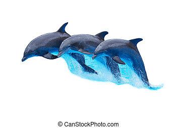biały, bottlenose, odizolowany, delfiny, skaczący