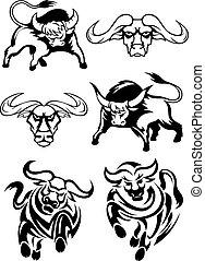 biały, czarnoskóry, albo, bawoły, byki